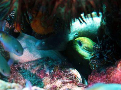 EastAfricaDiving_Zanzibar_reefdivingphotos_3149