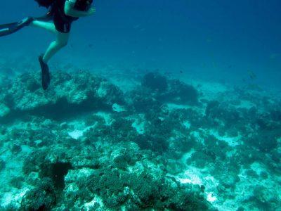 EastAfricaDiving_Zanzibar_reefdivingphotos_3225