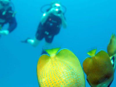 EastAfricaDiving_Zanzibar_reefdivingphotos_3274