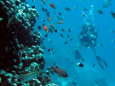 EastAfricaDiving_Zanzibar_reefdivingphotos_3299
