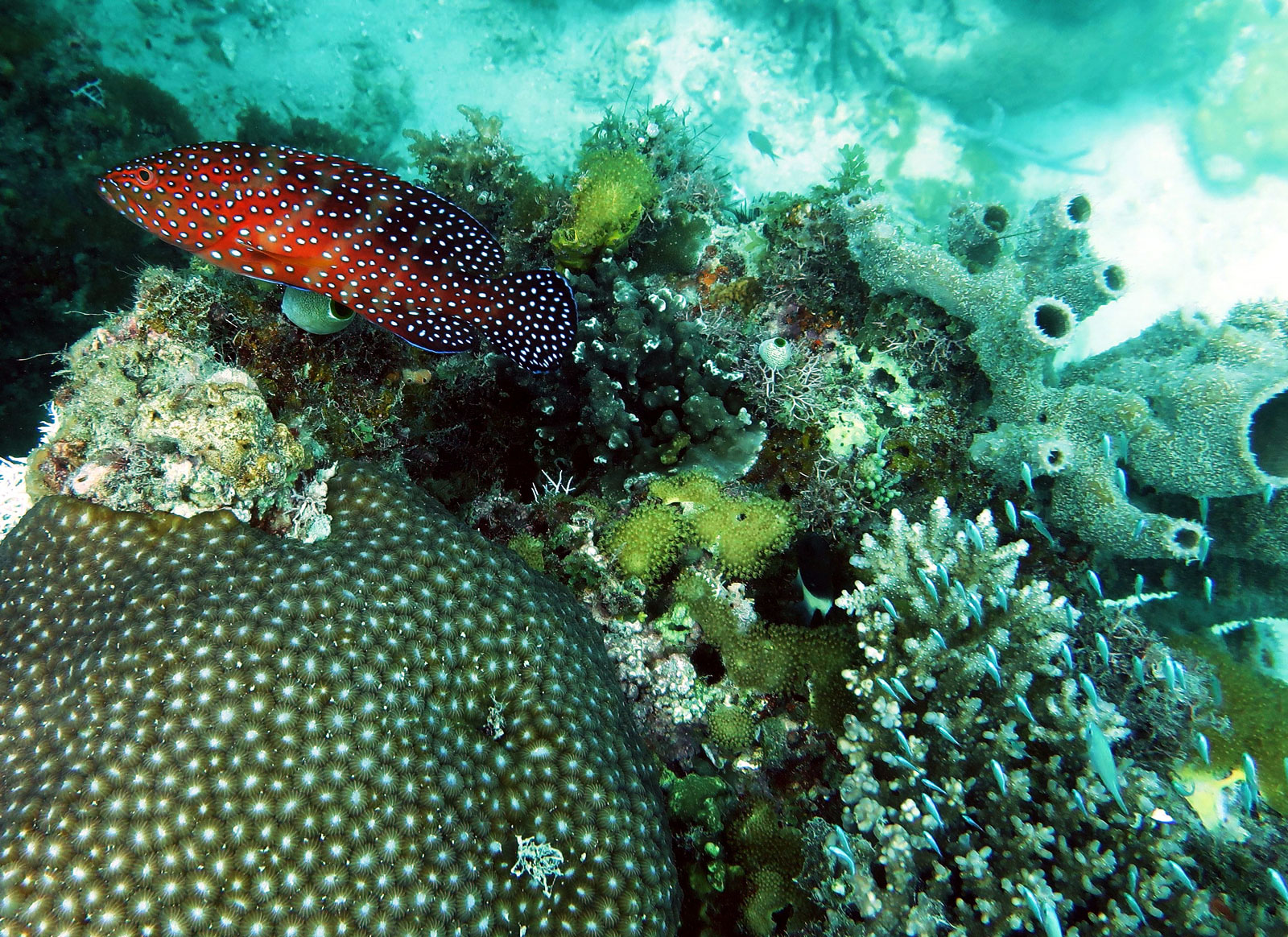 EastAfricaDiving_Zanzibar_reefdivingphotos_2782