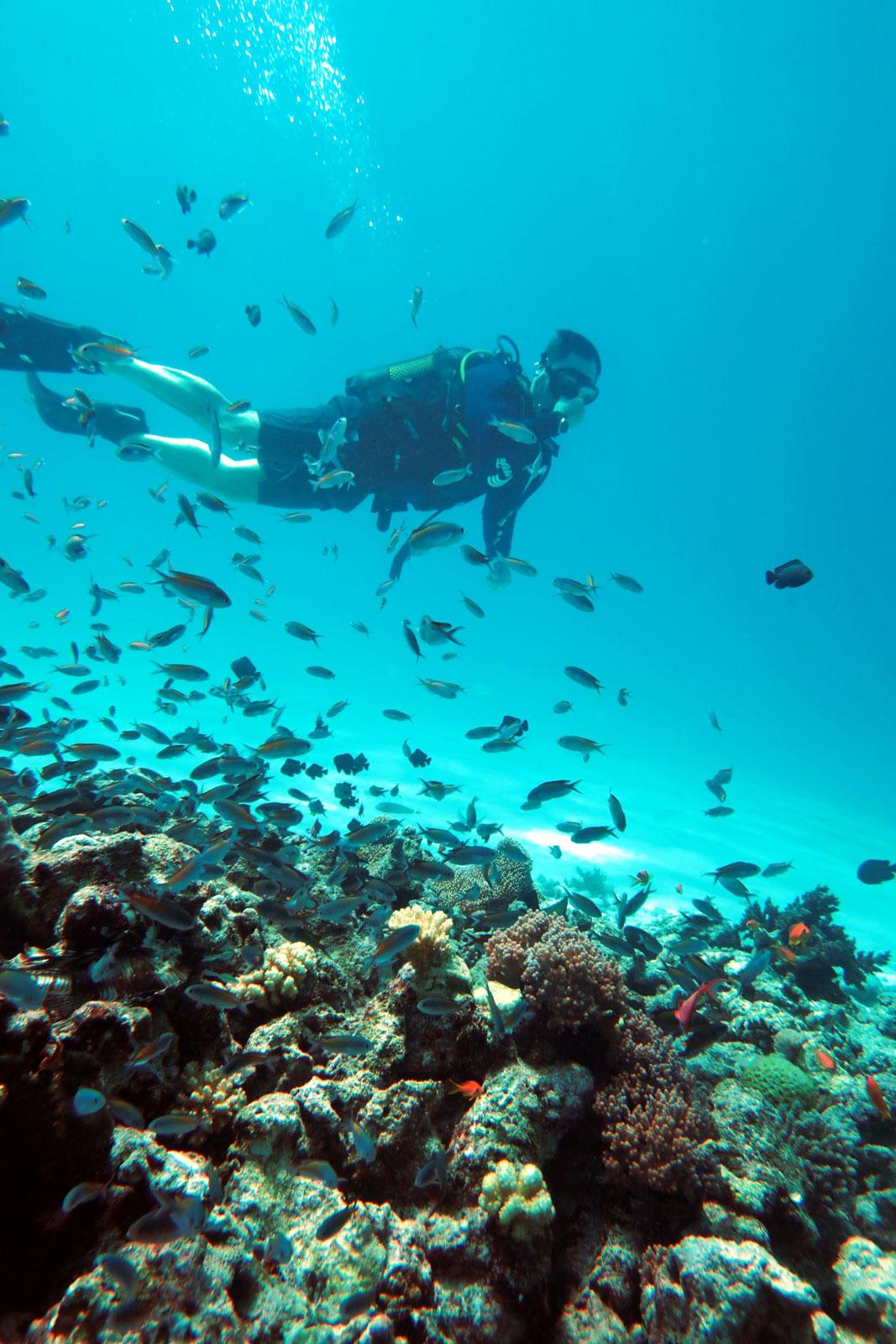 EastAfricaDiving_Zanzibar_reefdivingphotos_3138