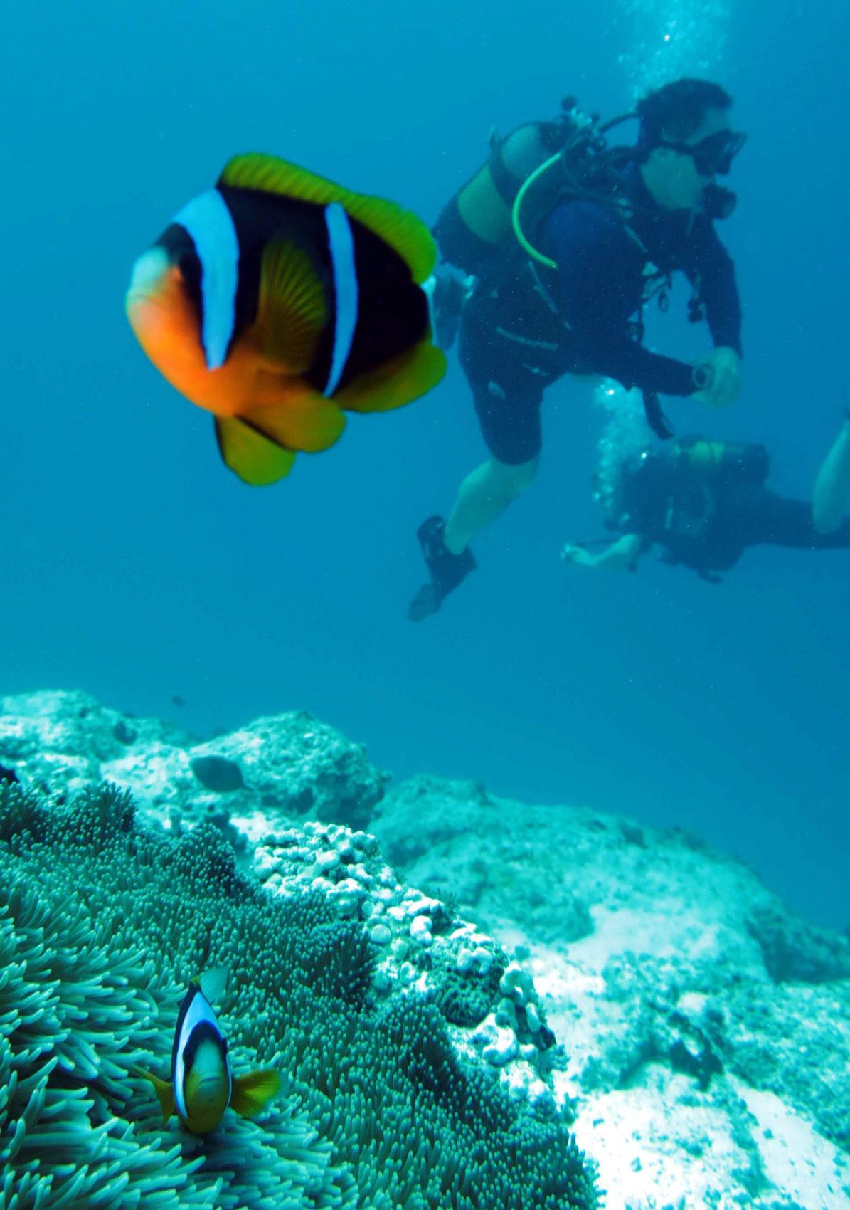 EastAfricaDiving_Zanzibar_reefdivingphotos_3182