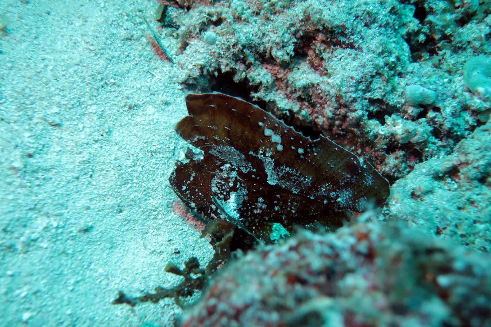 EastAfricaDiving_Zanzibar_reefdivingphotos_3187