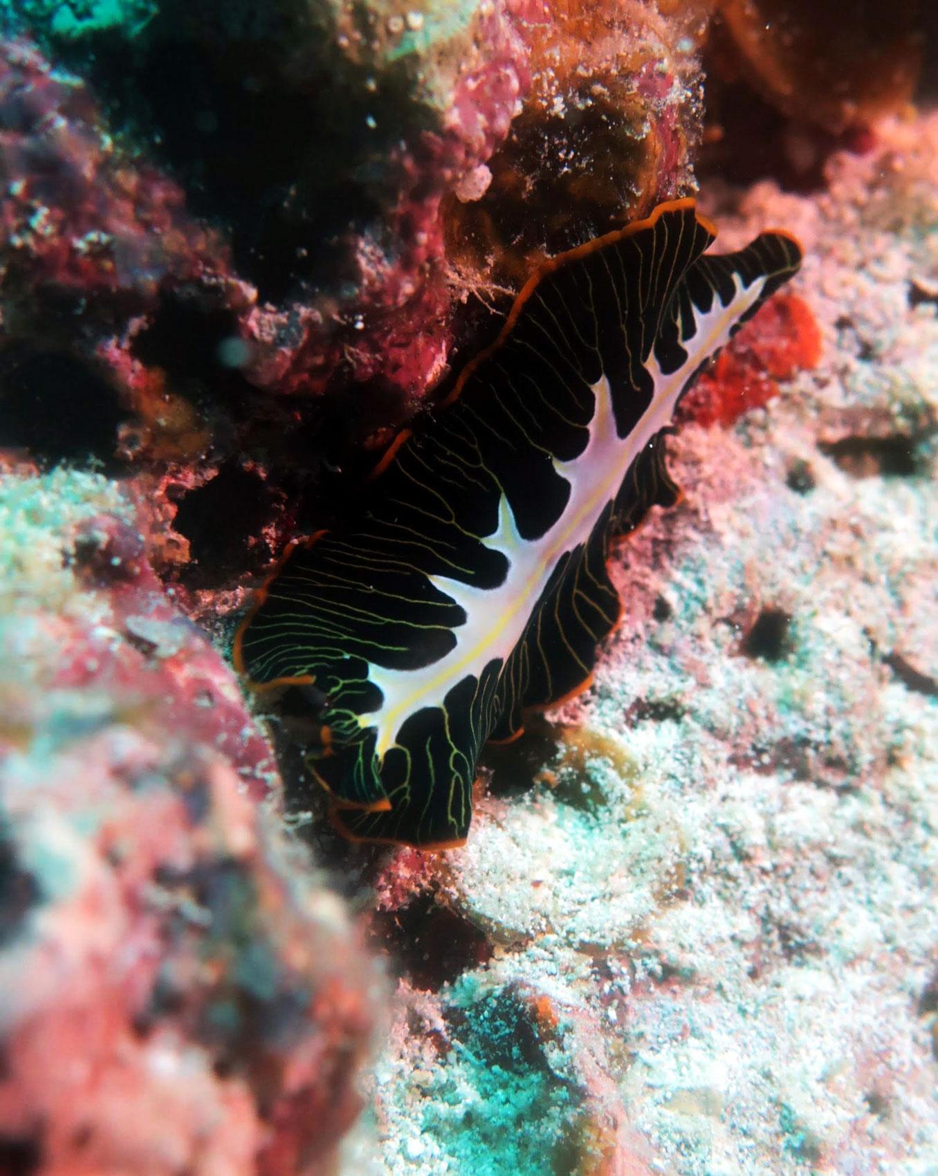 EastAfricaDiving_Zanzibar_reefdivingphotos_3217