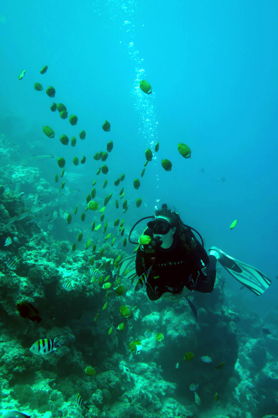 EastAfricaDiving_Zanzibar_reefdivingphotos_3279
