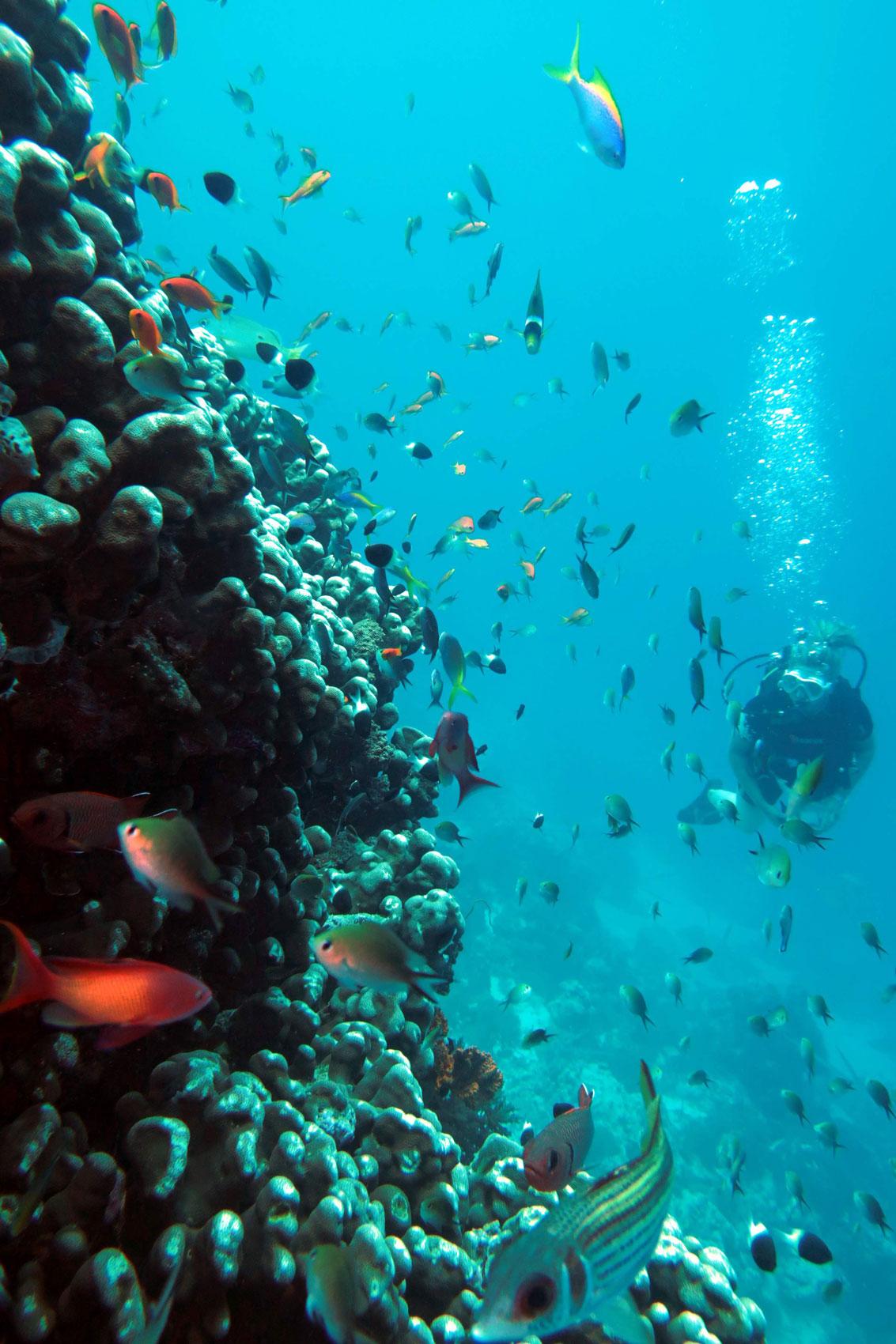 EastAfricaDiving_Zanzibar_reefdivingphotos_3301