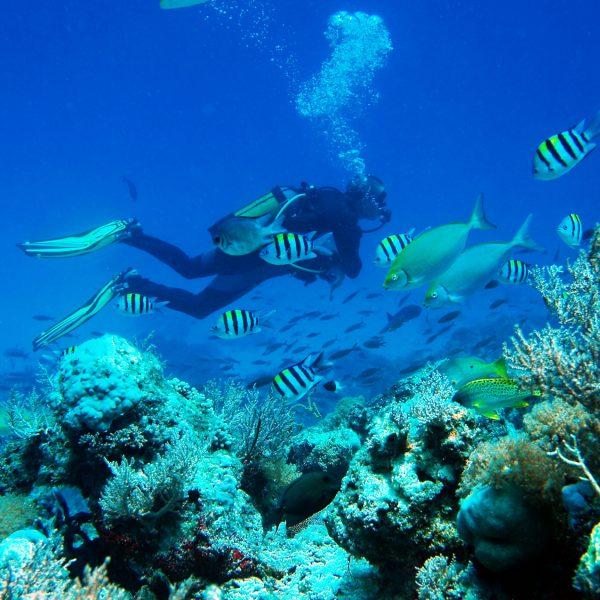 _EastAfricaDiving_Zanzibar_reefdivingphotos159164