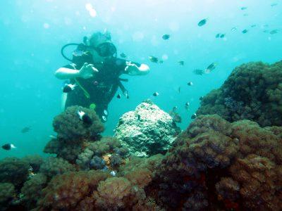 EastAfricaDiving_Zanzibar_reefdivingphotos_2963