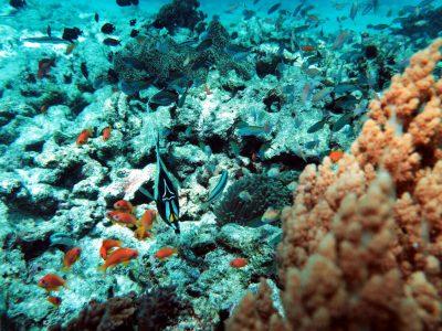 EastAfricaDiving_Zanzibar_reefdivingphotos_3153
