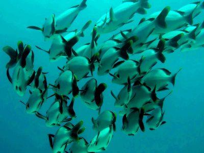 EastAfricaDiving_Zanzibar_reefdivingphotos_3220