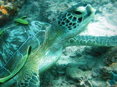 EastAfricaDiving_Zanzibar_reefdivingphotos_5978